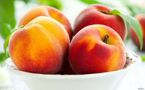 برداشت انواع میوه تابستانی از باغات گلستان+ ویدئو
