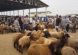 ورودخودروهای غیربومی به بازار دام شهرستان ترکمن ممنوع  است