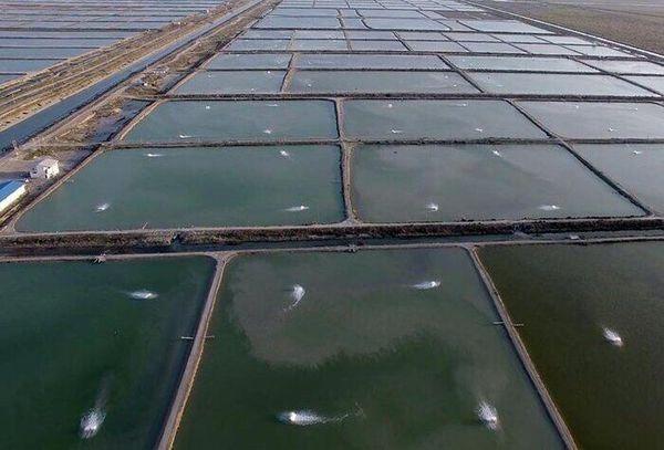 افزایش استقبال بخشی خصوصی از راهاندازی مزارع پرورش میگو در گلستان