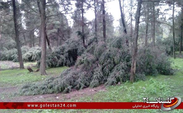 درختان کردکوی8