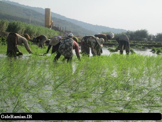 کشاورزان باید دست از روشهای سنتی بردارند