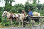 نقش اسب و ارابه در اقتصاد معیشتی روستائیان گلستان + تصاویر