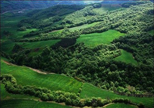 ثبت جهانی جنگلهای هیرکانی چه اتفاقاتی را برای این اکوسیستم میتواند رقم بزند؟