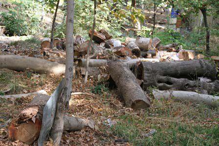 نابودی منابع طبیعی در گرگان + فیلم