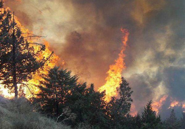 2 پرونده در خصوص آتشسوزی جنگلهای تشکیل شد