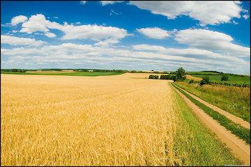 پرداخت 300 میلیارد ریال وجه محصولات کشاورزی به کشاورزان گلستانی